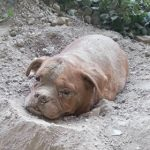 Frenchman sentenced to jail time for burying dog alive