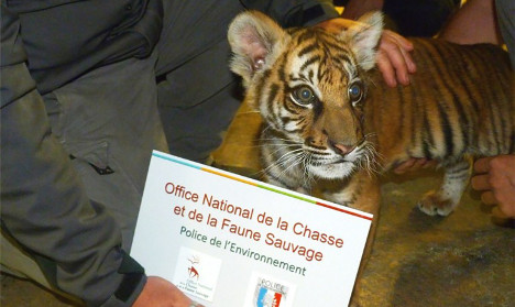 French drug dealer 'charged €5 for selfie with tiger cub'