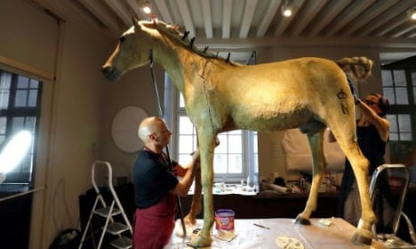 Napoleon's last horse to strut his stuff after makeover
