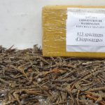 France seizes 2,000 'dead and dehydrated' seahorses
