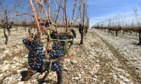 French wine output drops 10 percent after stormy weather