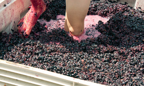 Only in France: 'Drive slowly – grape juice on the roads'