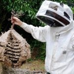 French hikers end in hospital after hornets launch sting