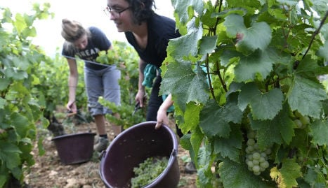 French wine makers fear 'worst harvest for 40 years'
