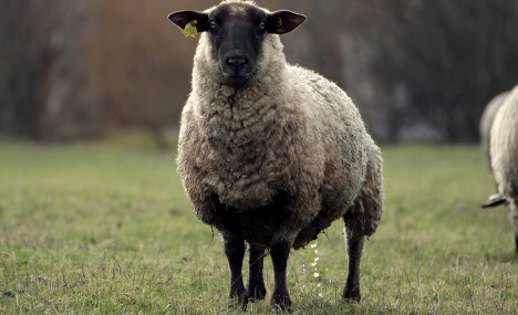 Frenchman, 94, killed in attack by rampaging sheep