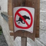Has a French mayor found the solution to the problem of dog poo?