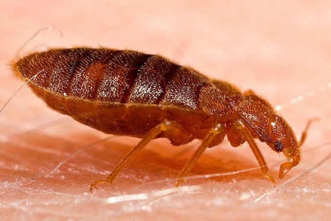 France bitten by '180,000 bed bug infestations' in just one year