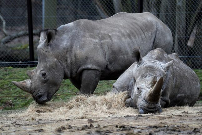 French conservations raise alarm after slaying of rhino in zoo