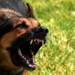 French town terrorised by pack of cow-killing dogs