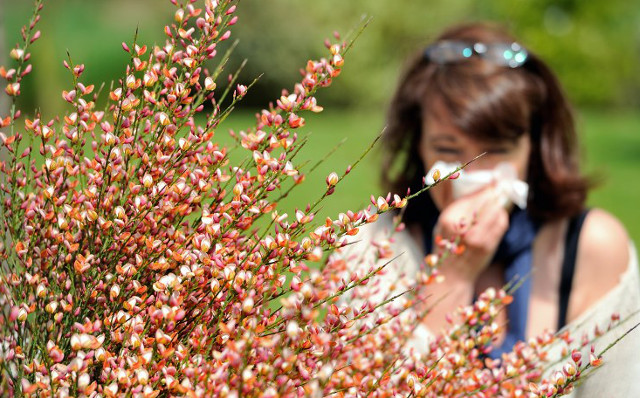 Allergy sufferers warned as most of France placed on alert for high pollen levels