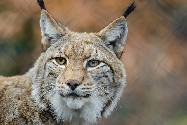 Police search for mysterious feline on the loose in Normandy countryside