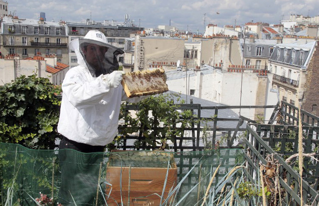 Paris: Rooftop hives on the rise amid efforts to preserve honeybee population