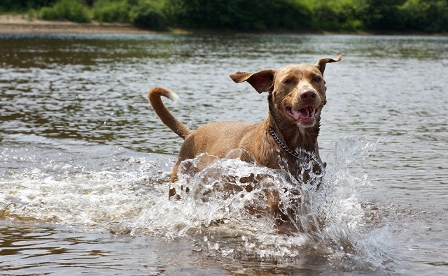 At least nine dogs dead after swimming in 'toxic' River Loire