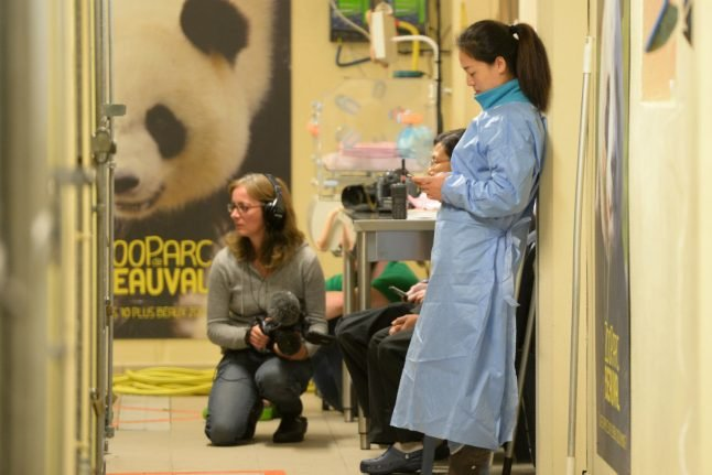 Panda gives birth to twins at French zoo, one cub dies