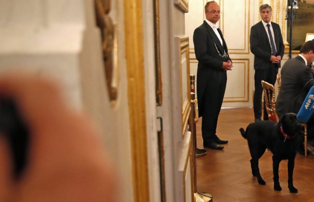 Macron adopts Nemo, France's new presidential pooch