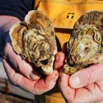 'World's first' flavoured oysters to be launched in France