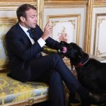 VIDEO: France's presidential pooch caught peeing on ornate Elysee fireplace