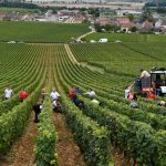 EU weedkiller row leaves French winegrowers with a hangover