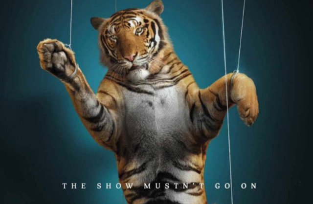 France under pressure to ban circus animals after killing of tiger in Paris