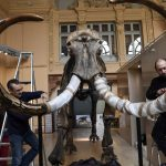 IN PICTURES: 12,000-year-old giant woolly mammoth skeleton to go on sale in France