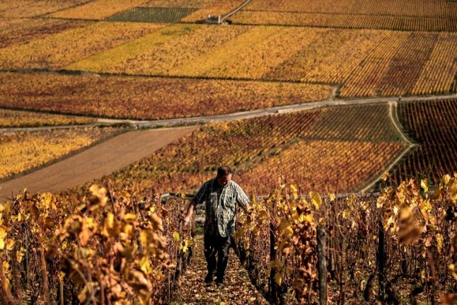 French wine country unveils its answer to kobe beef