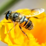 France stops sales of two US pesticides over threat to bees