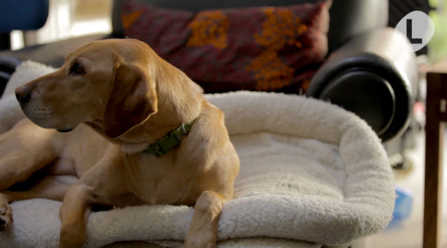 VIDEO: What do expats do with their pets when they travel?