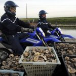 Cheese heists to oyster raids: How France is struggling in fight against gourmet thieves