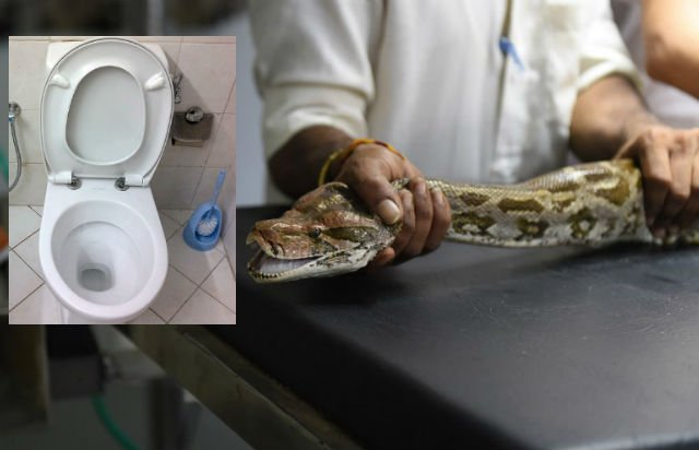 Frenchman grateful to have genitals intact after python pee shock