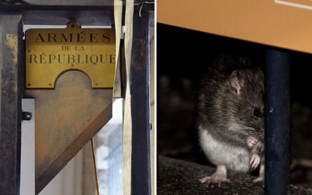 Paris could bring back the guillotine to stem the rat invasion