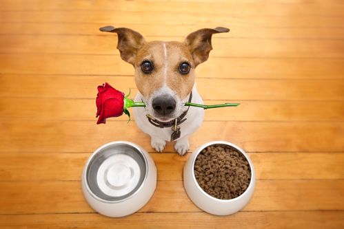 The French and animals: A quarter prefer Valentine's night with pets not lovers