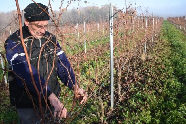 Bordeaux's 'magnificent' lost vintage pushes small growers to the edge