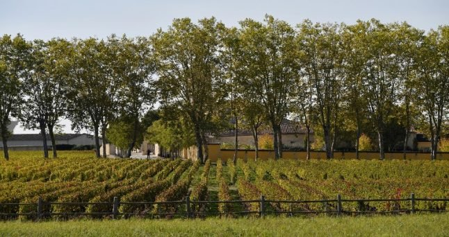 How French winegrowers are getting a helping hand from bats