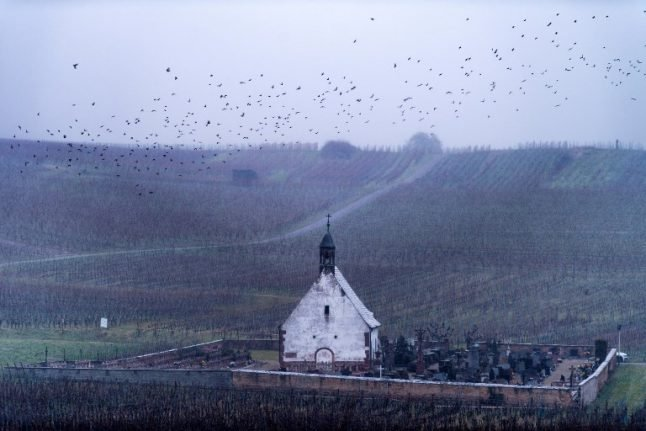 French countryside sees alarming 'collapse' of bird populations