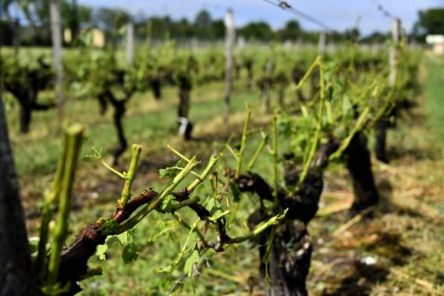 France eases rules on wine stocks to temper weather threat