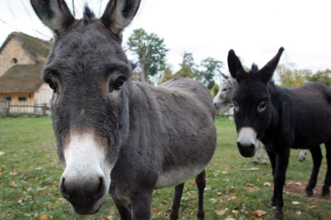 Donkey killer 'not guilty' of cruelty to animals, says French court