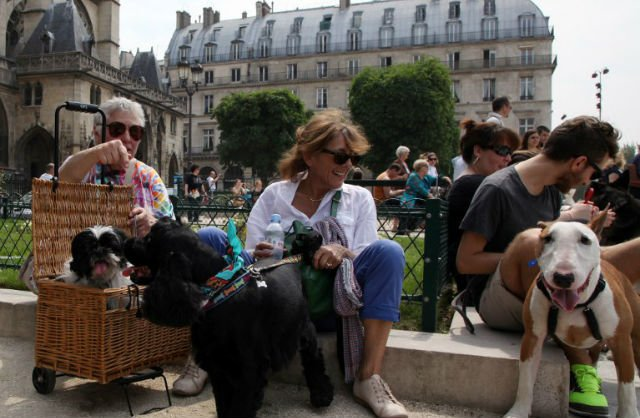 How to make friends with Parisians: Get a pampered pooch