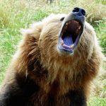 'My life flashed before my eyes': French hiker survives bear attack