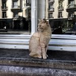 French MP calls for mice-hunting cats at presidential palace