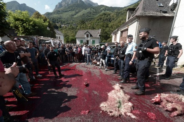 What's the story? Sheep carcasses, blood and scuffles in a French village