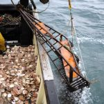 Scallop wars: British fishermen ask for protection from the French