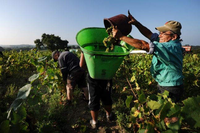 How France's vineyards are benefiting from the heatwave