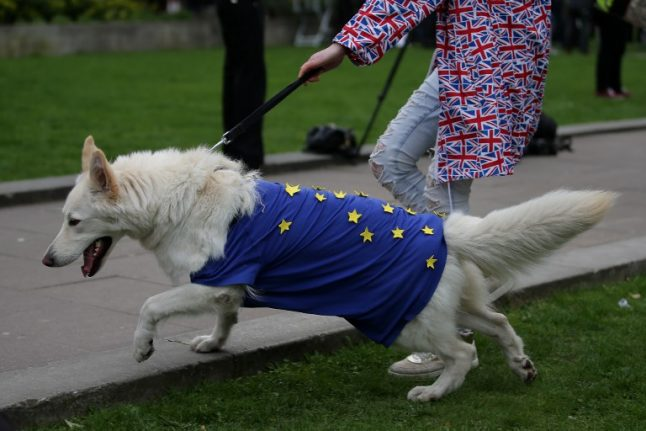 How a no-deal Brexit could mess up your dog's holiday to France