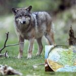 Glance around France: Mayors resign en masse and a dark day for wolves in Provence
