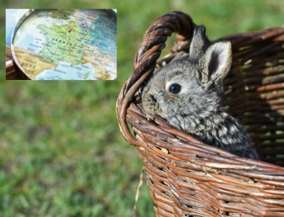 Glance around France: Rabbit murders and the resurrection of a homeless man's outdoor library
