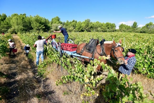 The future is green for French wine as organic sales soar