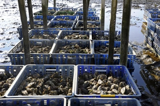 Fears in France there may not be enough oysters to satisfy festive appetites