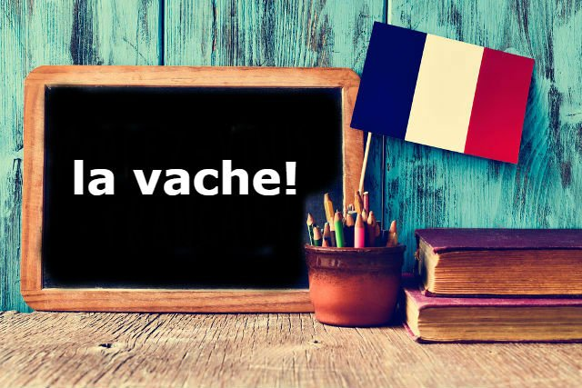 French Expression of the Day: la vache!