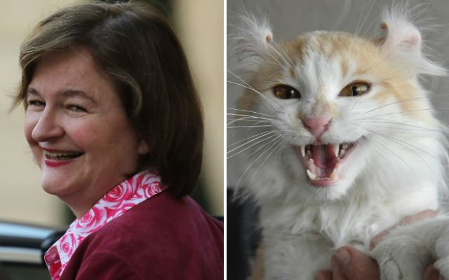 France's Europe Minister admits 'Brexit the cat' was just a joke