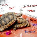 French slang: The everyday words they don't teach you at  school
